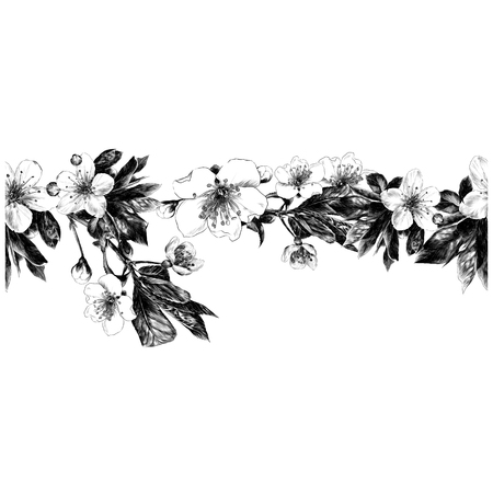Branches of apple flowers seamless pattern. Strip frame line monochrome, black-and-white drawing sketch vector graphics. Иллюстрация