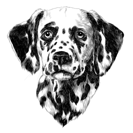Dalmatians sketch illustration. Vector graphics monochrome, black-and-white drawing. Stok Fotoğraf - 95810634