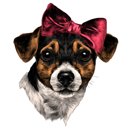 Dog Jack Russell Terrier with bow head sketch. Vector graphics, color picture. Çizim
