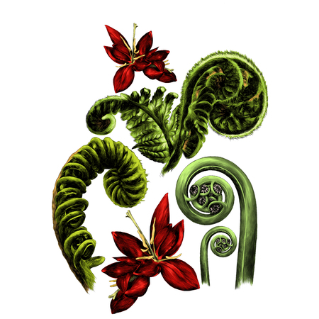 Fern flowers spiral sprouts leaf set sketch. Vector graphics, color picture.
