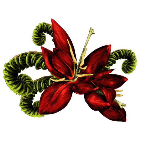 The fern flower blooms red pinstripe fern sprout, spiral sketch. Vector graphics, color picture.