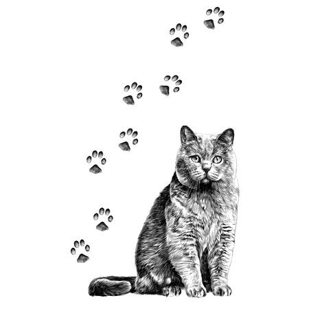 chat avec pattes croquis graphiques vectoriels monochrome dessin en noir et blanc