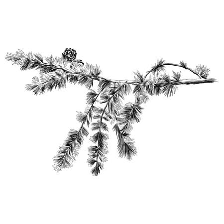 larch branch sketch vector graphics monochrome black-and-white drawing Stock Illustratie