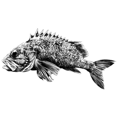 the perch sketch vector graphics monochrome black-and-white drawing