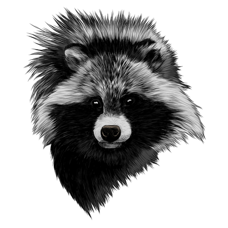 the raccoon dog sketch head vector graphics color picture