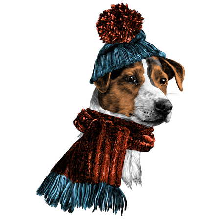 dog in hat and scarf Jack Russell Terrier head winter clothing sketch vector graphics color picture 写真素材 - 95674931