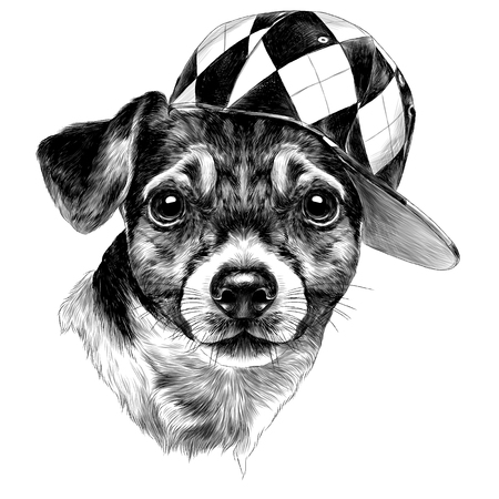 dog Jack Russell Terrier head with a cap sketch vector graphics monochrome colored drawing