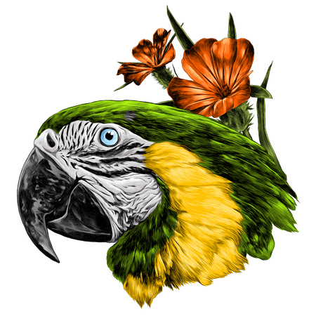 parrot head with flowers sketch vector graphics color picture