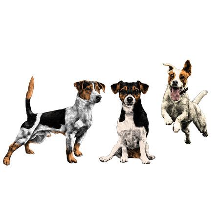 3匹の犬ジャックラッセルテリアセットスケッチベクトルグラフィックスカラー画像