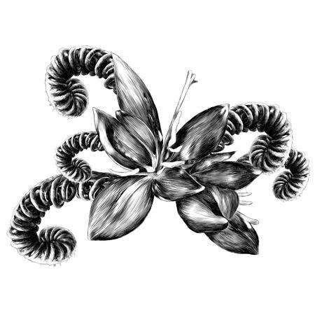 Il fiore di felce fiorisce rosso gessato felce germoglio spirale schizzo grafica vettoriale monocromatico disegno bianco e nero Archivio Fotografico - 95675015
