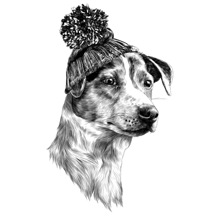 dog in hat and scarf Jack Russell Terrier head winter clothing sketch vector graphics monochrome black-and-white drawing