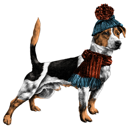 dog in hat and scarf Jack Russell Terrier winter clothes sketch vector graphics color picture