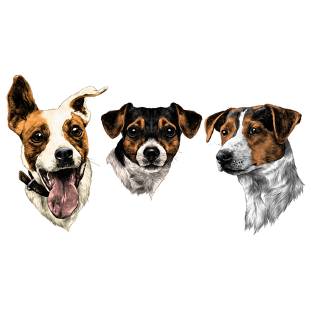 three dogs Jack Russell Terrier a set of Christmas gifts sketch vector graphics color picture 矢量图像