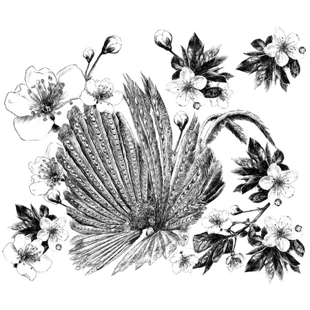 Peacock feathers Apple flowers sketch vector graphics monochrome black-and-white drawing