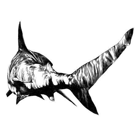 shark sketch vector graphics monochrome black-and-white drawing Banco de Imagens - 95675097