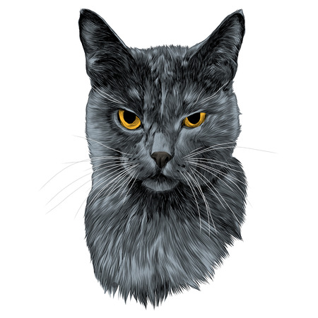 the cat face sketch vector graphics color picture