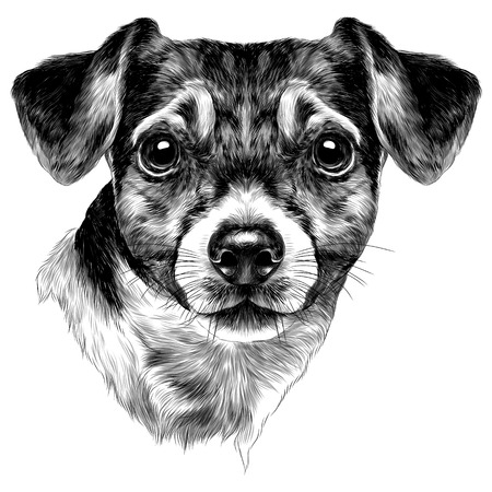 dog Jack Russell Terrier with bow head sketch vector graphics monochrome black-and-white drawing Reklamní fotografie - 95675146