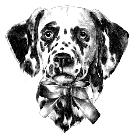 Dalmatians bow sketch vector graphics monochrome black-and-white drawing