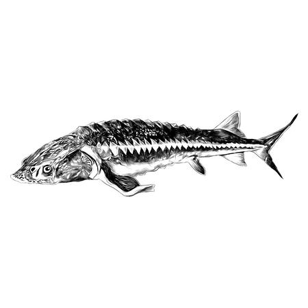 チョウザメ魚スケッチベクターグラフィックス黒と白のモノクロパターン