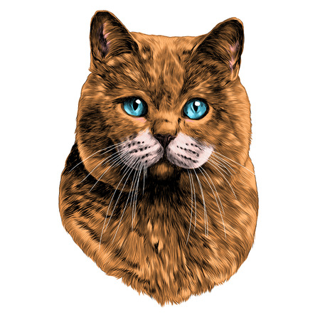 cat head sketch vector graphics color picture