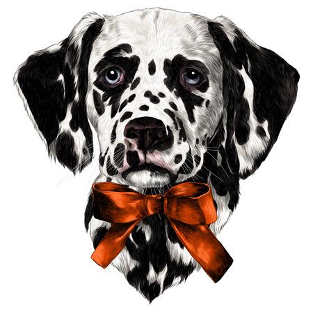 Dalmatians bow sketch vector graphics color drawing