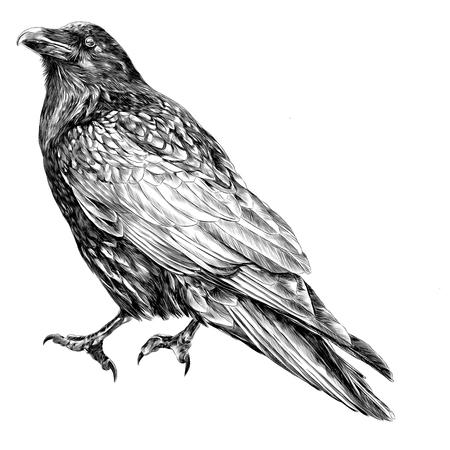 Raven schets vectorafbeeldingen monochroom zwart-wit tekening Stock Illustratie