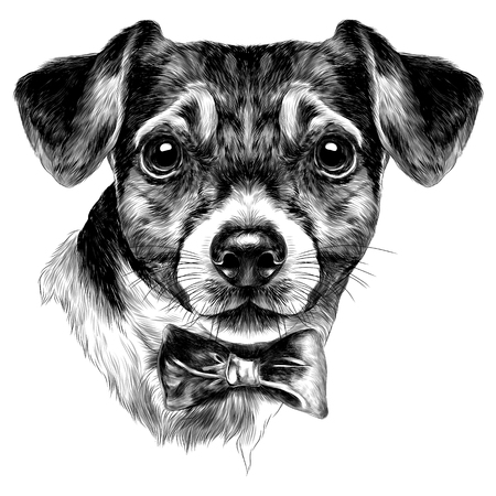dog Jack Russell Terrier with bow head sketch vector graphics monochrome black-and-white drawing