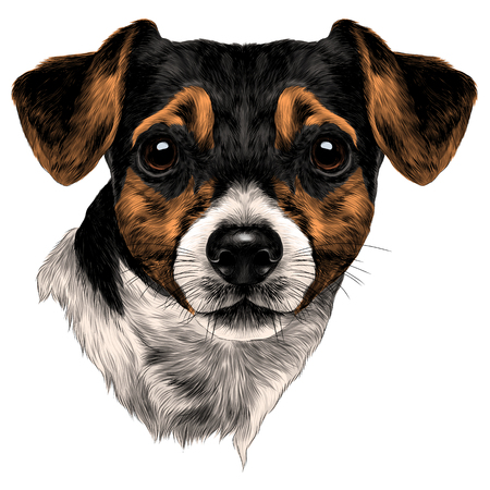 dog Jack Russell Terrier with bow head sketch vector graphics color picture