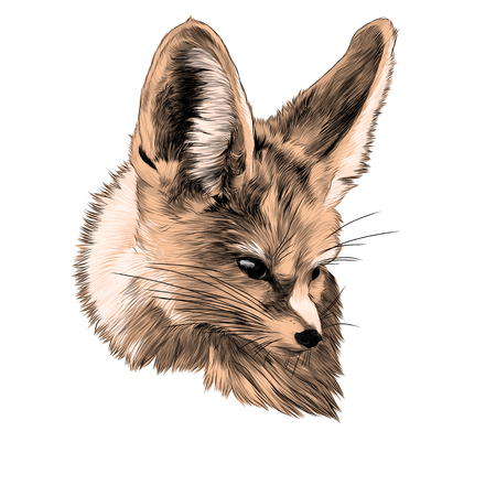fenik sketch Fox head vector graphics color picture