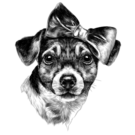dog Jack Russell Terrier with bow head sketch vector graphics picture