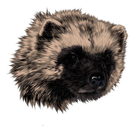 Wolverine schets hoofd vectorafbeeldingen kleurenafbeelding Stock Illustratie