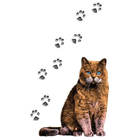 cat with paws sketch vector graphics color picture
