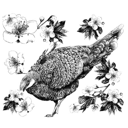 Poultry with flowers and shoots of Apple tree branch sketch vector graphics monochrome black-and-white drawing