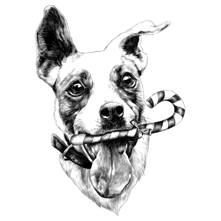 head dog Jack Russell Terrier fun with candy sketch vector graphics monochrome black-and-white drawing Illustration