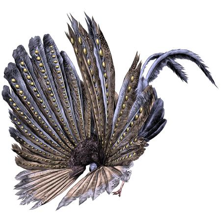 孔雀の羽スケッチベクトルグラフィックスカラー画像