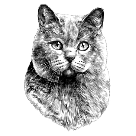 cat head sketch vector graphics monochrome black-and-white drawing