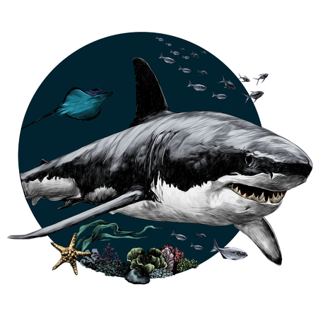 shark sketch for t-shirt vector graphics color picture