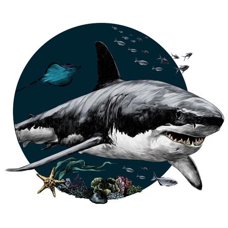 Tシャツベクターグラフィックスカラー画像のためのサメスケッチ  イラスト・ベクター素材