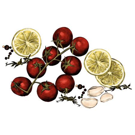 tomatoes lemon garlic seasoning sketch vector graphics color picture
