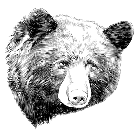 black bear sketch head vector graphics monochrome black and white drawing