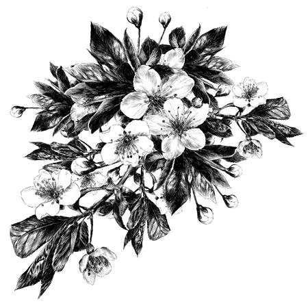 アップルの花スケッチベクターグラフィックモノクロ白黒描画