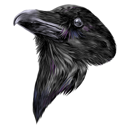 the Raven head sketch vector graphics color picture