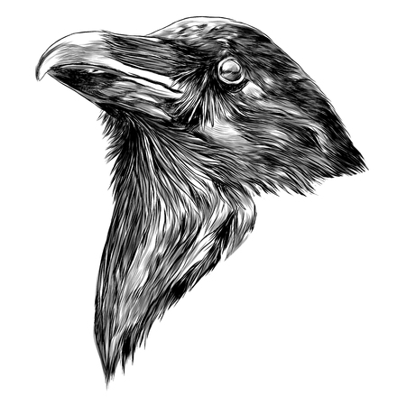 the Raven head sketch vector graphics monochrome black-and-white drawing