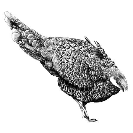 Bird  sketch vector graphics monochrome black-and-white drawing