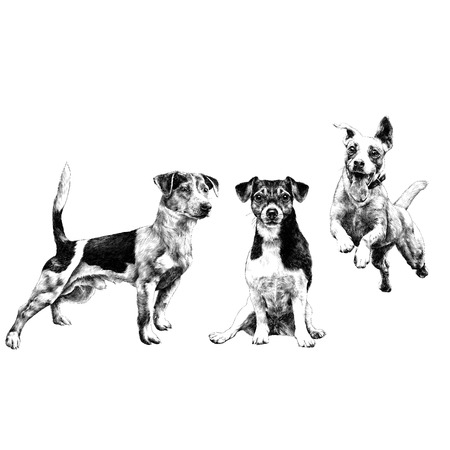 three dogs Jack Russell Terrier a set sketch vector graphics monochrome black-and-white drawing