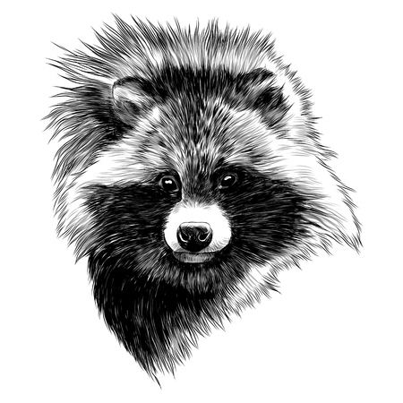 the raccoon dog sketch head vector graphics monochrome black and white drawing Stok Fotoğraf - 95675453