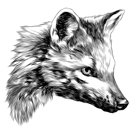 meikong sketch head Bush Fox vector graphics monochrome black and white drawing