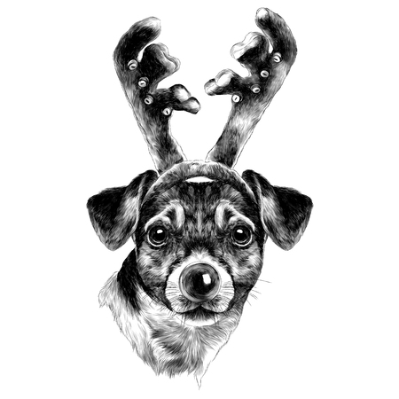 Dog Jack Russell Terrier head with horns and nose of a new year sketch. Vector graphics monochrome, black-and-white drawing.