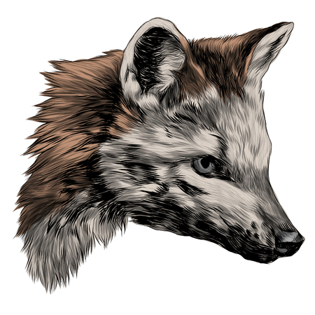 meikong sketch head Bush Fox vector graphics color picture