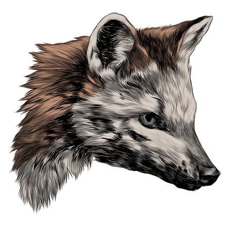 meikong sketch head Bush Fox vector graphics color picture